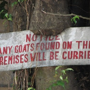 Watch your goat